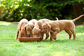 PUP 20 JE0012 01