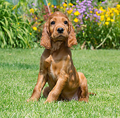 PUP 20 JE0014 01