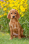 PUP 20 JE0017 01