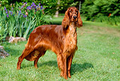 PUP 20 CE0001 01