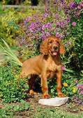 PUP 20 CE0004 01