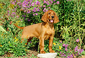 PUP 20 CE0005 01