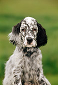 PUP 20 CE0013 01