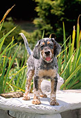 PUP 20 CE0015 01