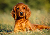 PUP 20 GR0003 01
