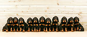 PUP 20 JD0001 01