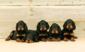 PUP 20 JD0003 01