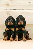 PUP 20 JD0005 01