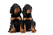 PUP 20 JD0007 01