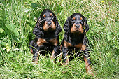 PUP 20 JD0011 01