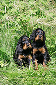 PUP 20 JD0012 01