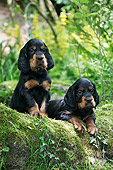 PUP 20 JD0013 01