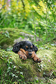 PUP 20 JD0014 01