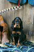 PUP 20 JD0017 01