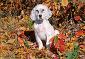PUP 20 LS0001 01