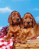 PUP 20 RK0004 05