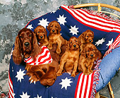PUP 20 RK0006 03