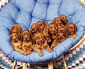 PUP 20 RK0007 18