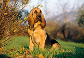 PUP 21 CB0001 01
