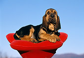 PUP 21 CB0003 01