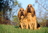 PUP 21 CB0007 01