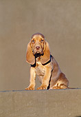 PUP 21 CB0009 01