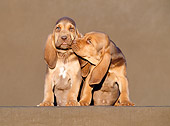 PUP 21 CB0010 01