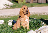 PUP 21 CB0013 01