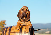 PUP 21 CB0014 01