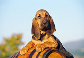 PUP 21 CB0016 01