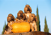 PUP 21 CB0017 01