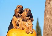 PUP 21 CB0018 01