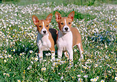 PUP 21 CB0025 01