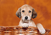 PUP 21 CB0026 01