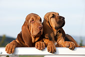 PUP 21 CB0036 01