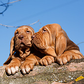 PUP 21 CB0045 01