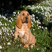 PUP 21 CB0047 01