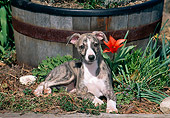 PUP 21 CE0034 01