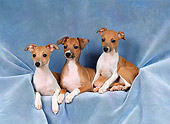 PUP 21 FA0008 01