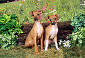 PUP 21 FA0009 01