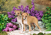PUP 21 FA0010 01