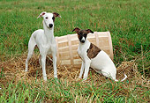 PUP 21 FA0011 01