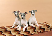 PUP 21 FA0014 01