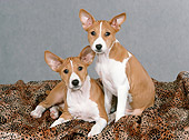 PUP 21 FA0016 01