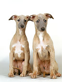 PUP 21 GL0001 01
