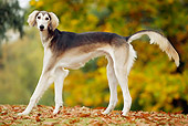 PUP 21 JE0001 01