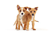 PUP 21 JE0004 01