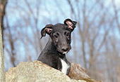 PUP 21 JN0002 01