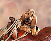 PUP 21 RK0001 05