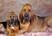 PUP 21 RK0010 04